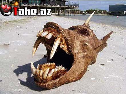 Əslində bir maket olan bu balıq daha sonra Ebayda satıldı.