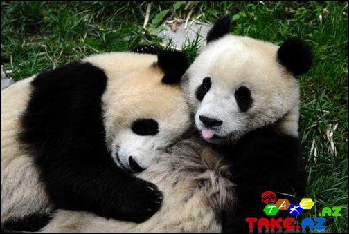 Panda [Photo's]
