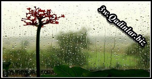 Payiz sevgisi ( Kamal Abdulla )