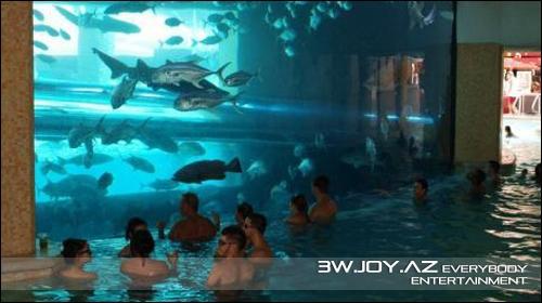 Köpək balıqlarıyla hovuzda su təpələri
