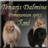 kennel Tenaris Dalmine