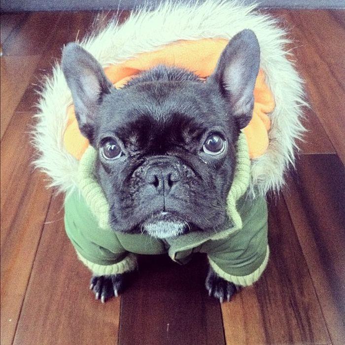 Пёс Троттер и его наряды