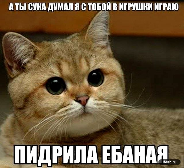 http://imgs.su/tmp/2012-12-01/1354307483-516.jpg