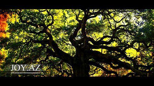 5 inanılmaz ağac