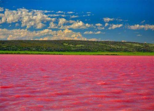 Çəhrayı gölün sirri