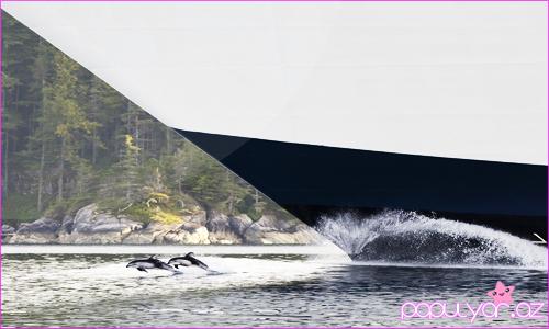 Delfinlər haqqında maraqlı fakt