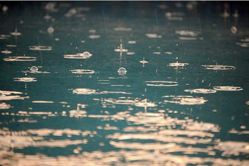 Yağış gifləri
