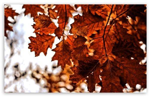 Autumn[1]