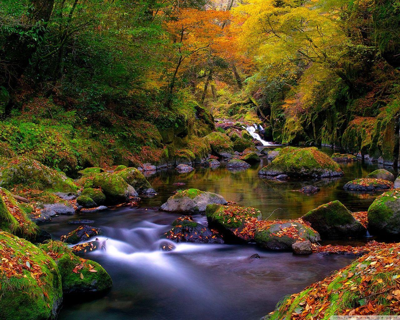 Autumn[2]