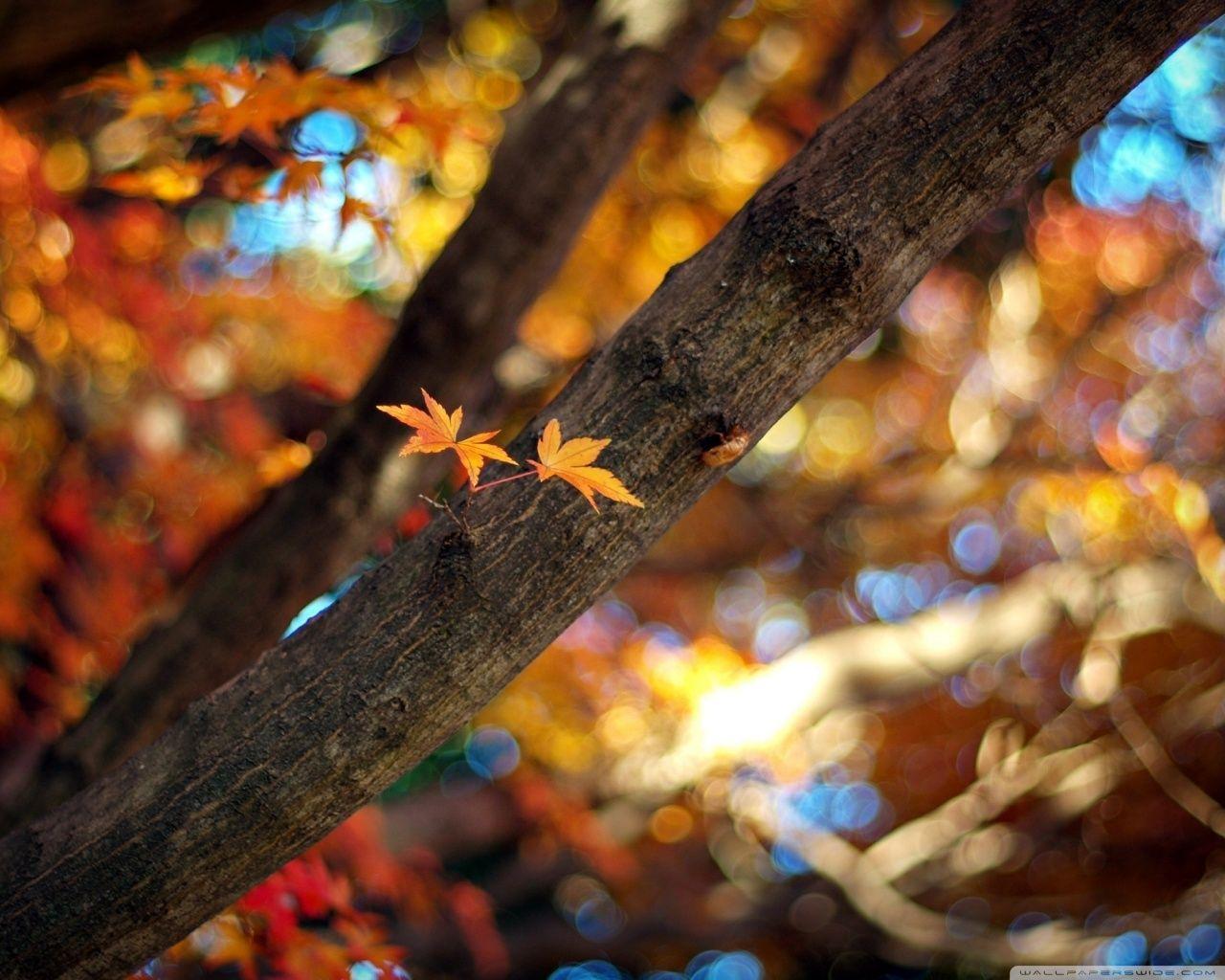 Payız