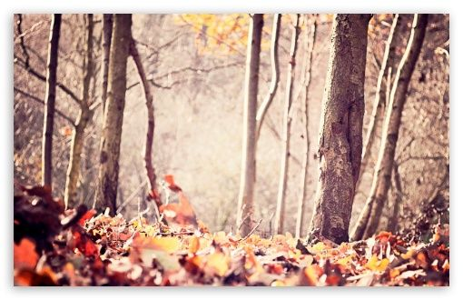 Autumn [3]