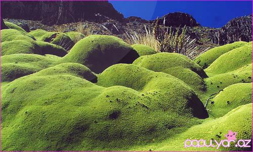 Daha maraqlı bir bitki haqqında - FOTO