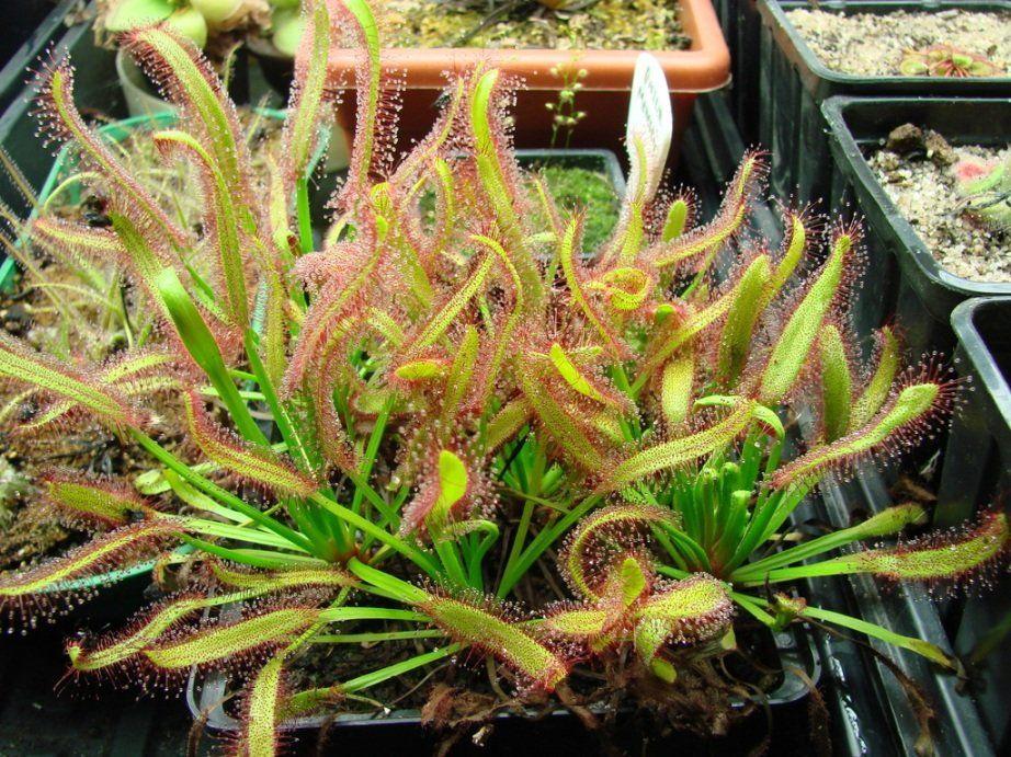 Самые жуткие растения планеты Земля - Тридевятое Царство