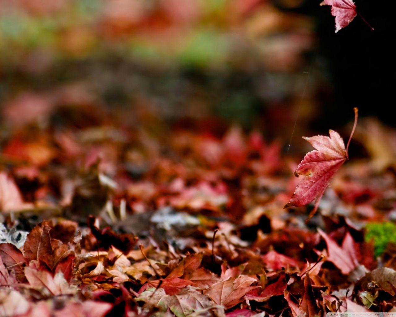 Autumn [5]
