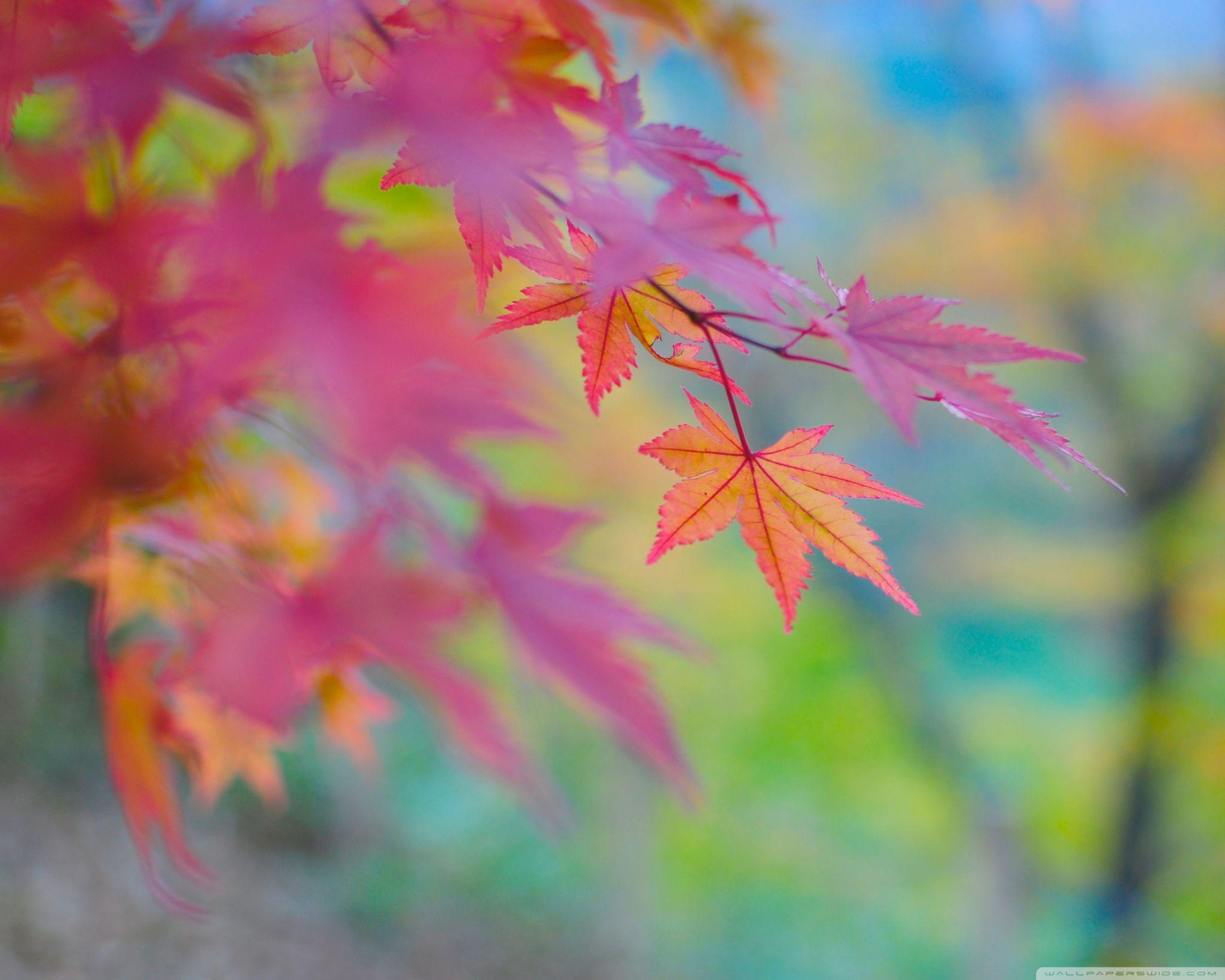 Autumn [6]