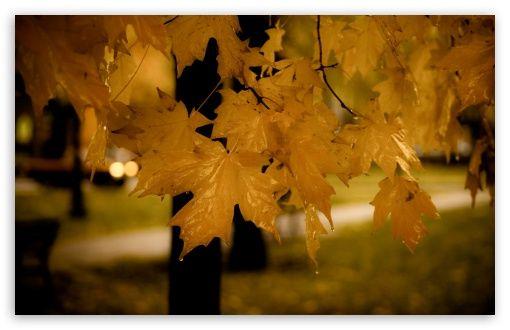 Autumn [7]