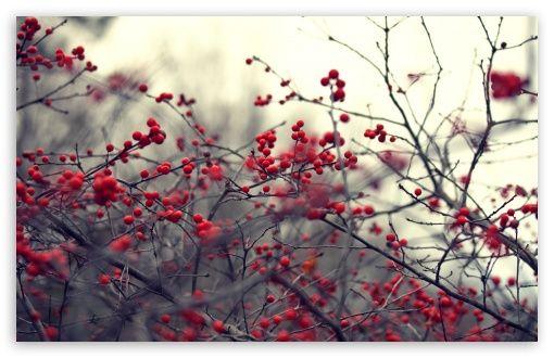 Autumn [10]
