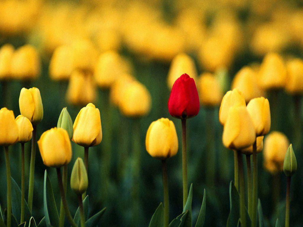 Sarı rəngi sevənlər üçün
