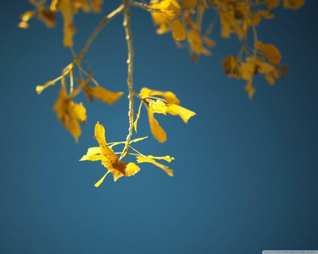 Autumn [13]