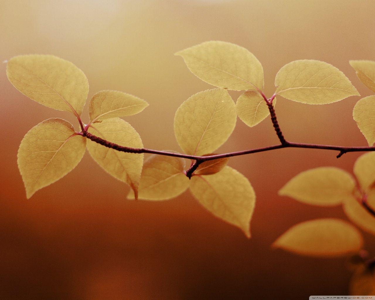 Autumn [14]