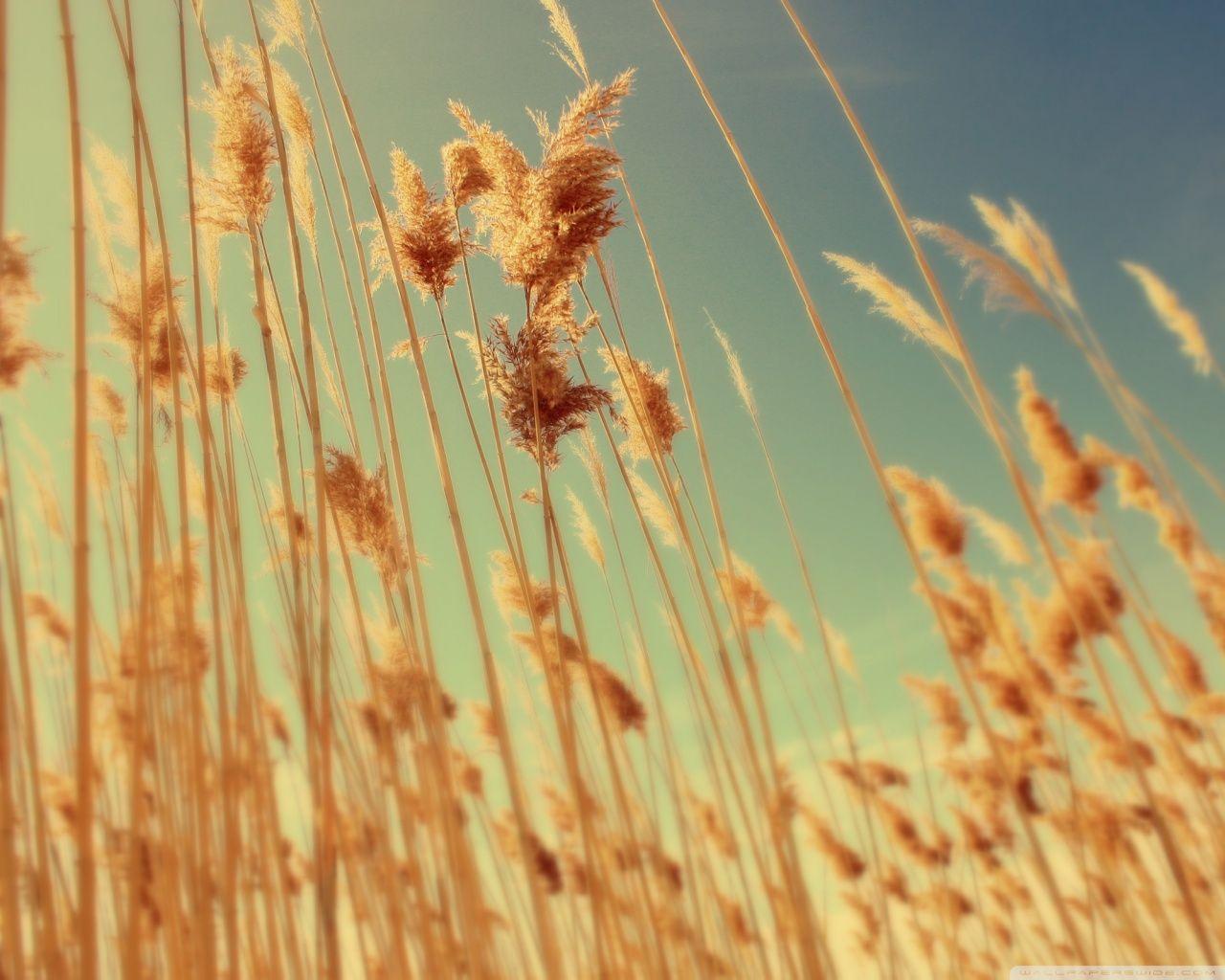 Autumn [15]