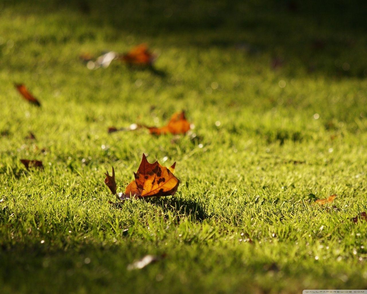 Autumn [16]