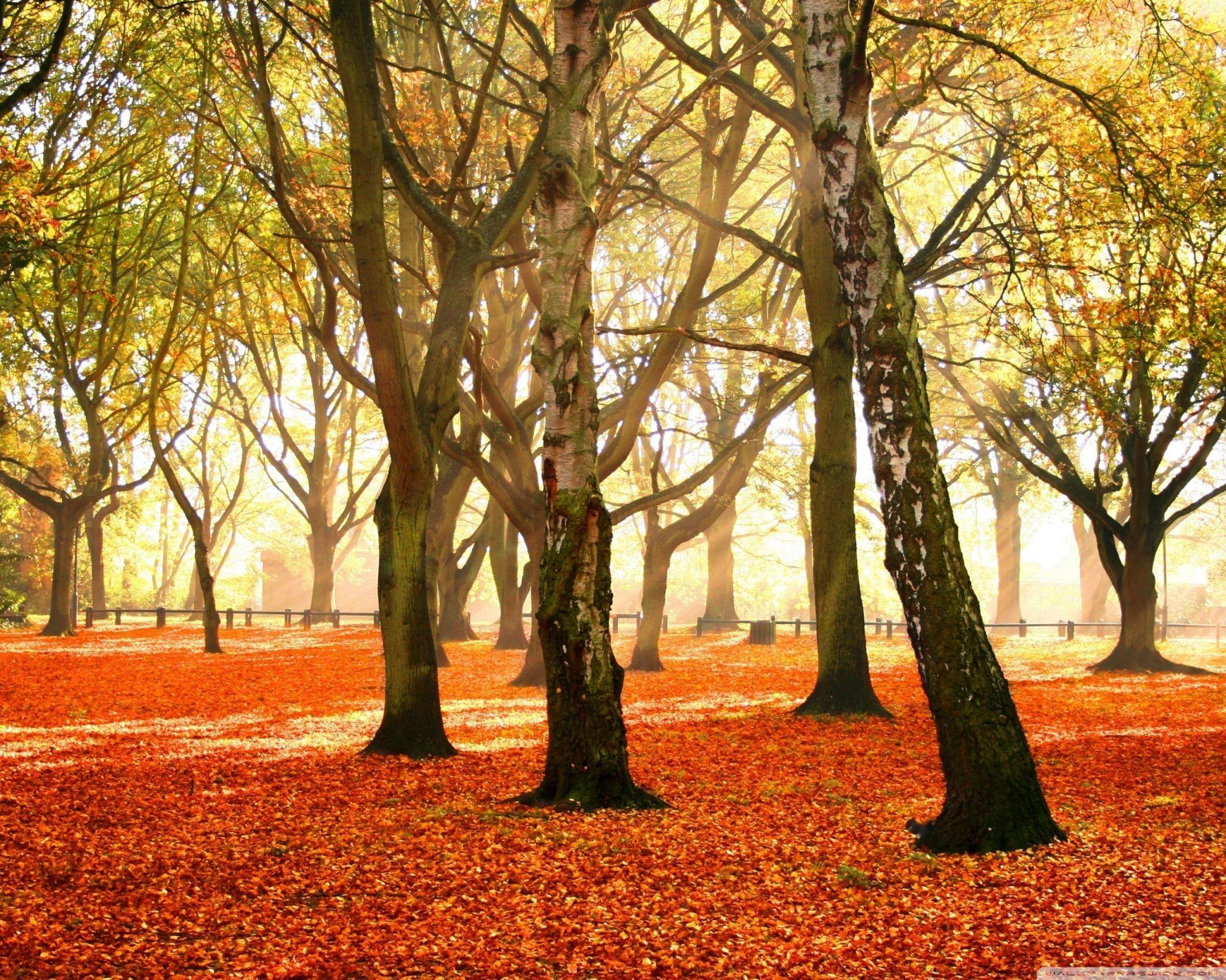 Autumn [17]