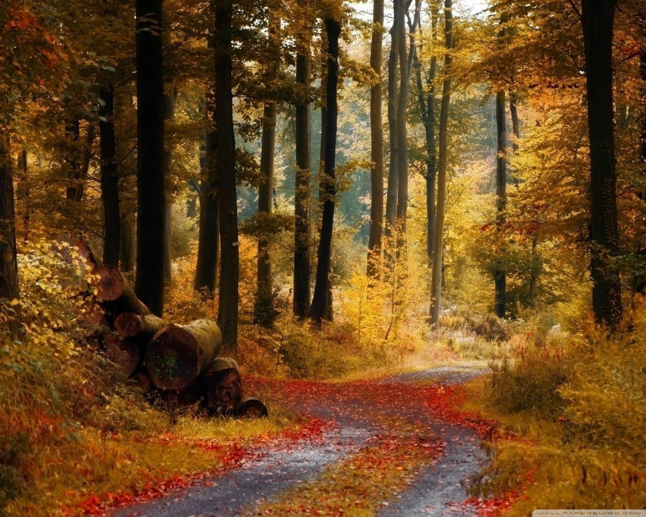 Autumn [19]