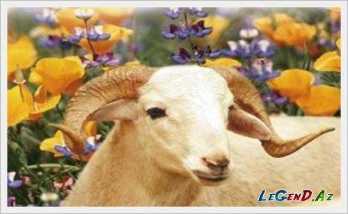 Qurbanlıq heyvanların satış ünvanları (SİYAHI)