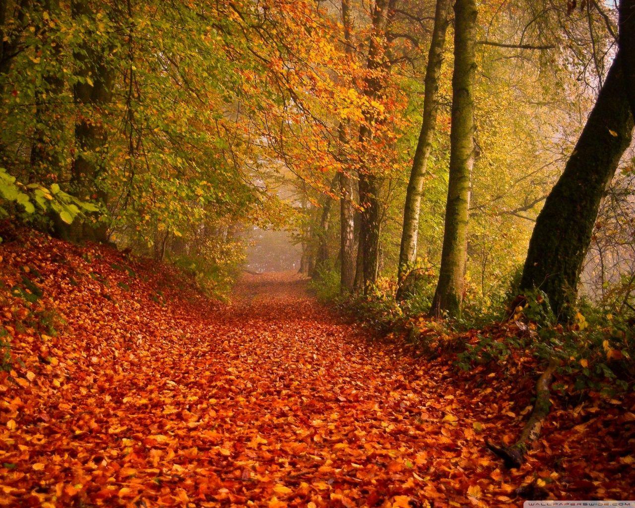 Autumn [20]