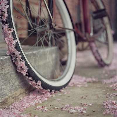 Beautiful Bicycles