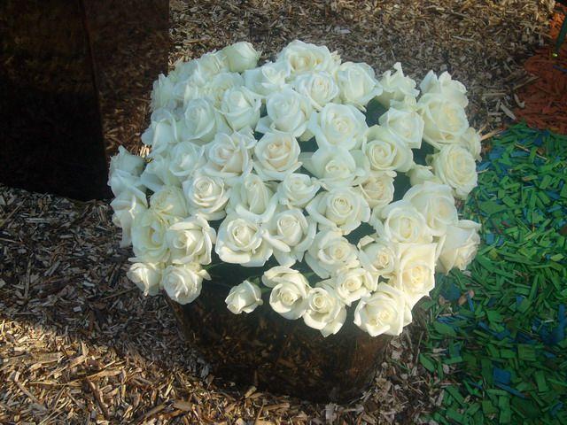 Белые розы - Символ чистой любви