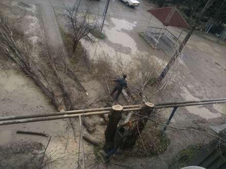 Nazirlik ağac terroruna izn verib - İddia/Video