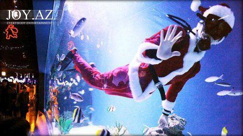Santa Klaus köpək balıqları ilə üzdü