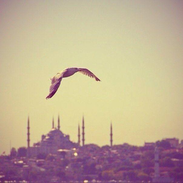 Азербайджанская ♥ Любовь