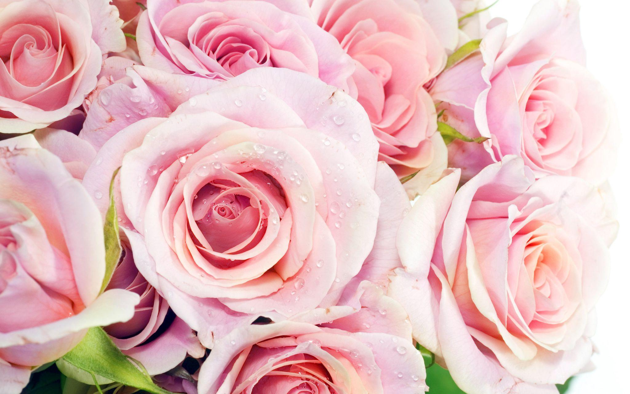 Kрасочные цветы *6*