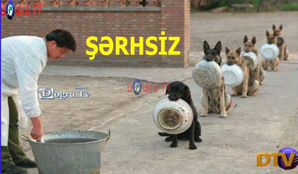 Şərhsiz
