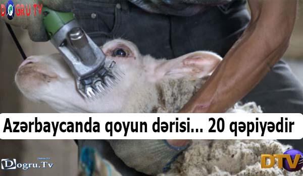 Azərbaycanda qoyun dərisi... 20 qəpiyədir