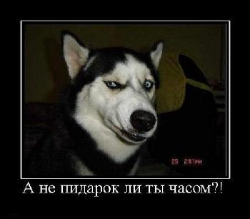 http://imgs.su/tmp/2013-03-29/1364572122-537.jpg