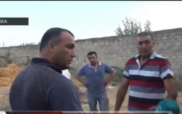Qubanın Vəlvələ kəndində   qanunsuz sex-  bələdiyyə sədri qanunsuz olaraq qoz ağaclarını kəsdirib - Video