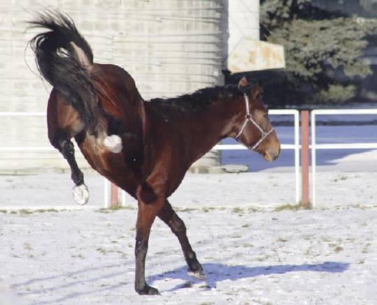 21 yaşlı oğlanı at təpiklə vurdu - Xərçəng xəstəliyi müalicə olundu..